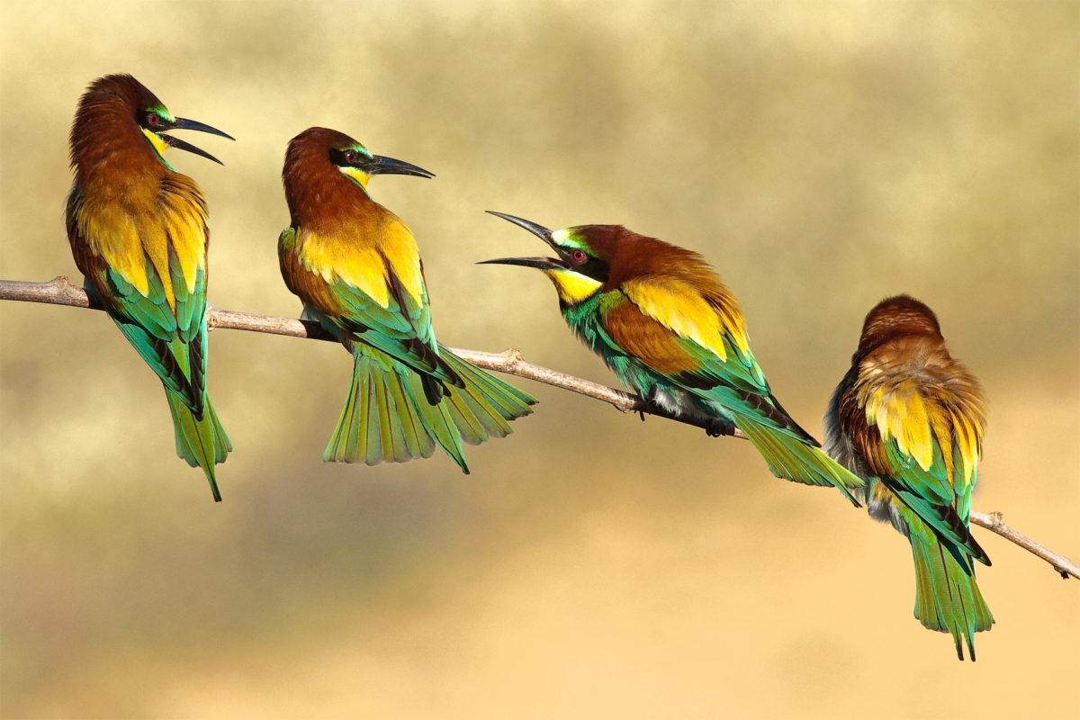 ما هي خصائص الطيور