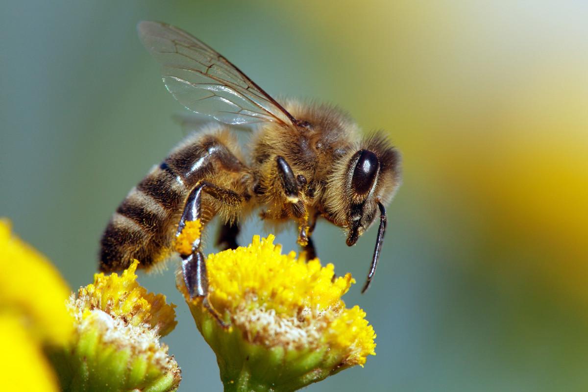الفراشات والنمل والنحل أمثلة على حشرات تمر خلال دورة حياتها ب