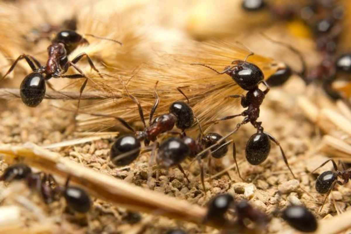عش النمل مصنوع من