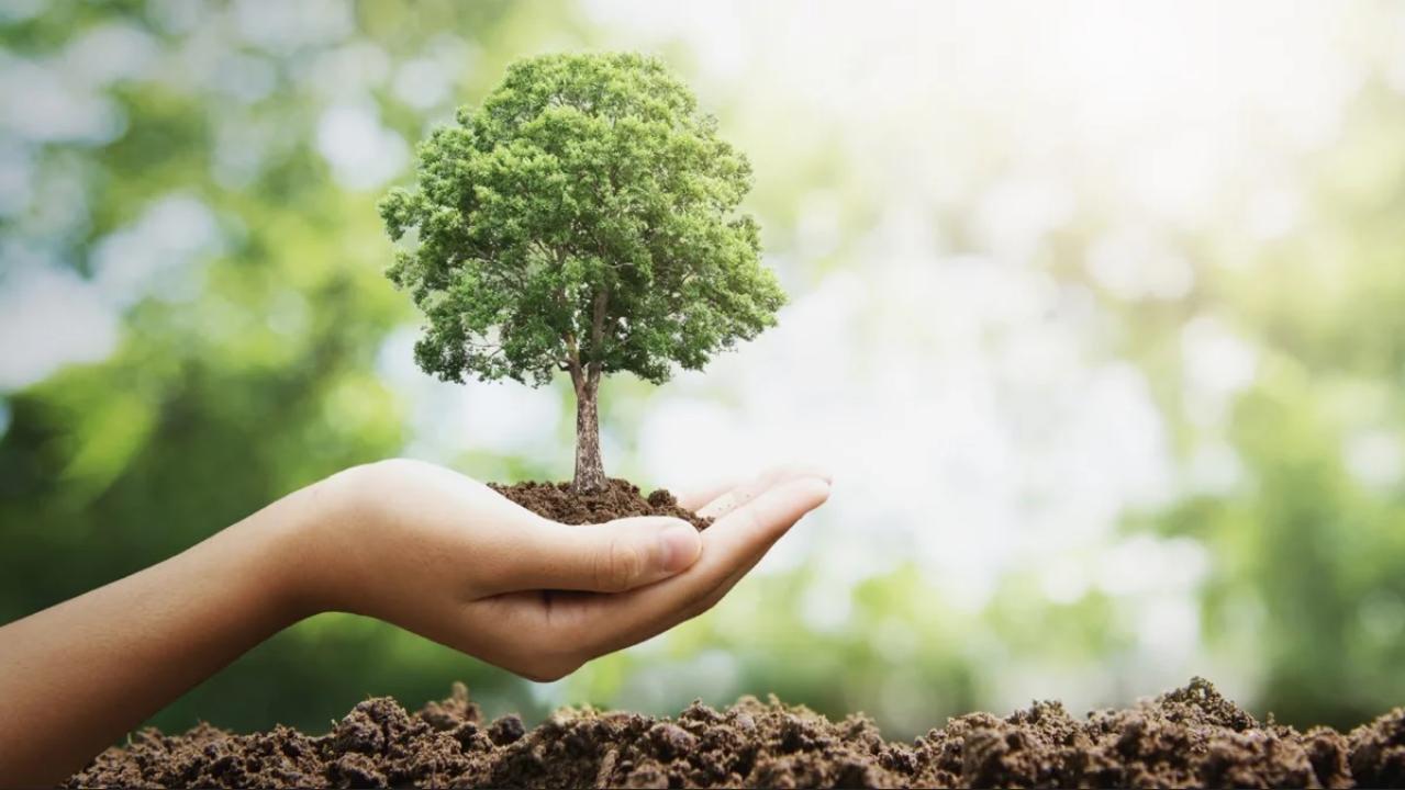 كيف نحافظ على البيئة