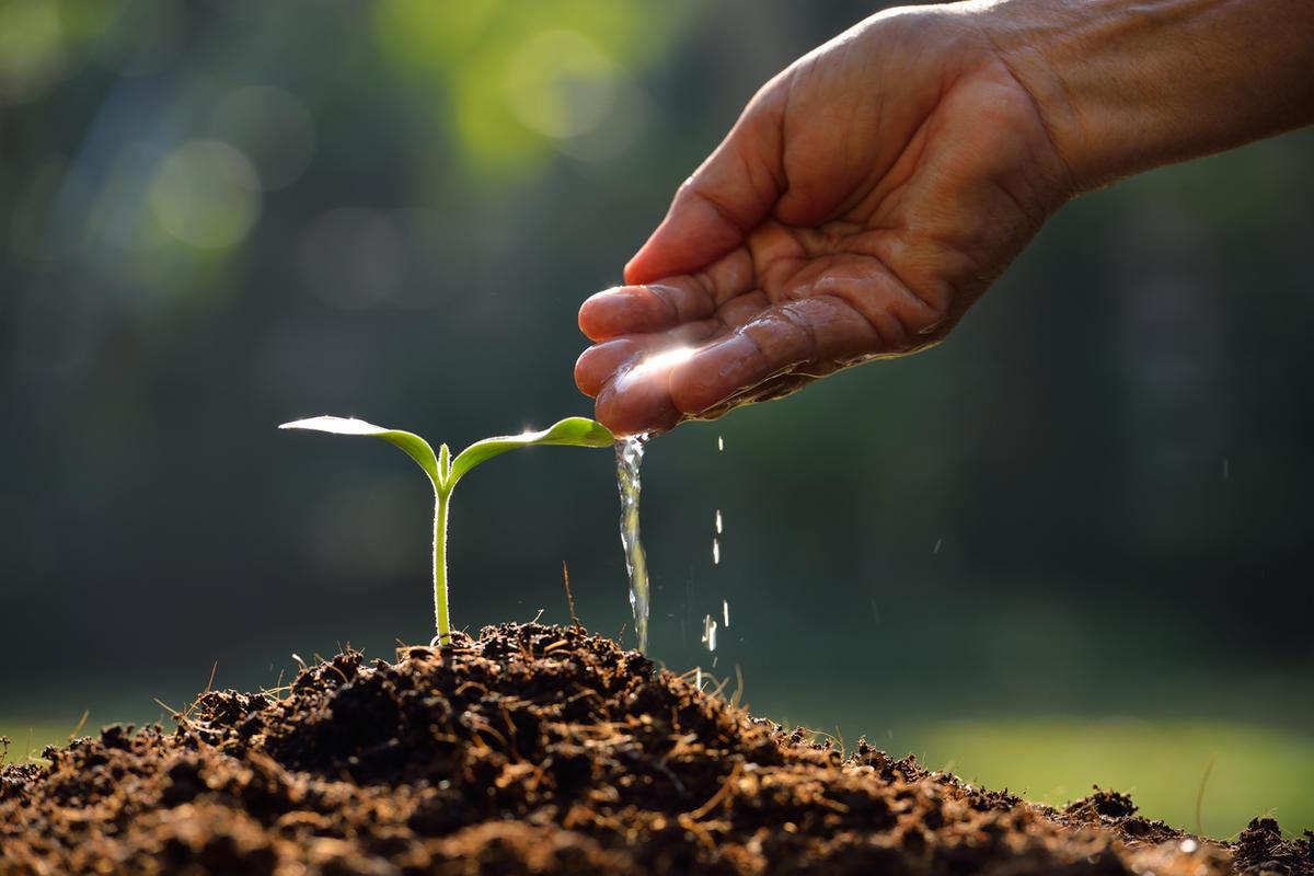 كيف يستطيع الانسان الاسهام في احياء الأرض