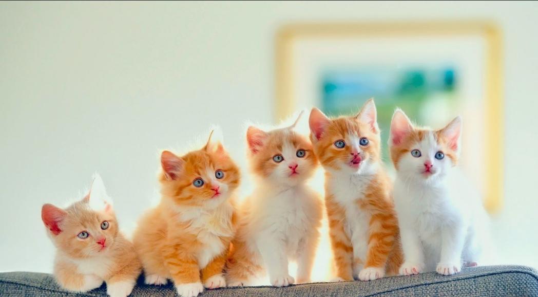 تفسير القطط في المنام لابن سيرين أدق التفسيرات