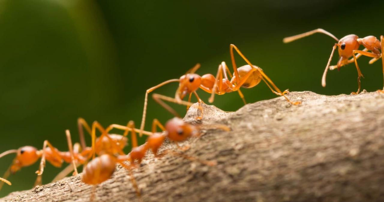 ما هو تفسير النمل في المنام لابن سيرين بشرة خير أو شر ؟