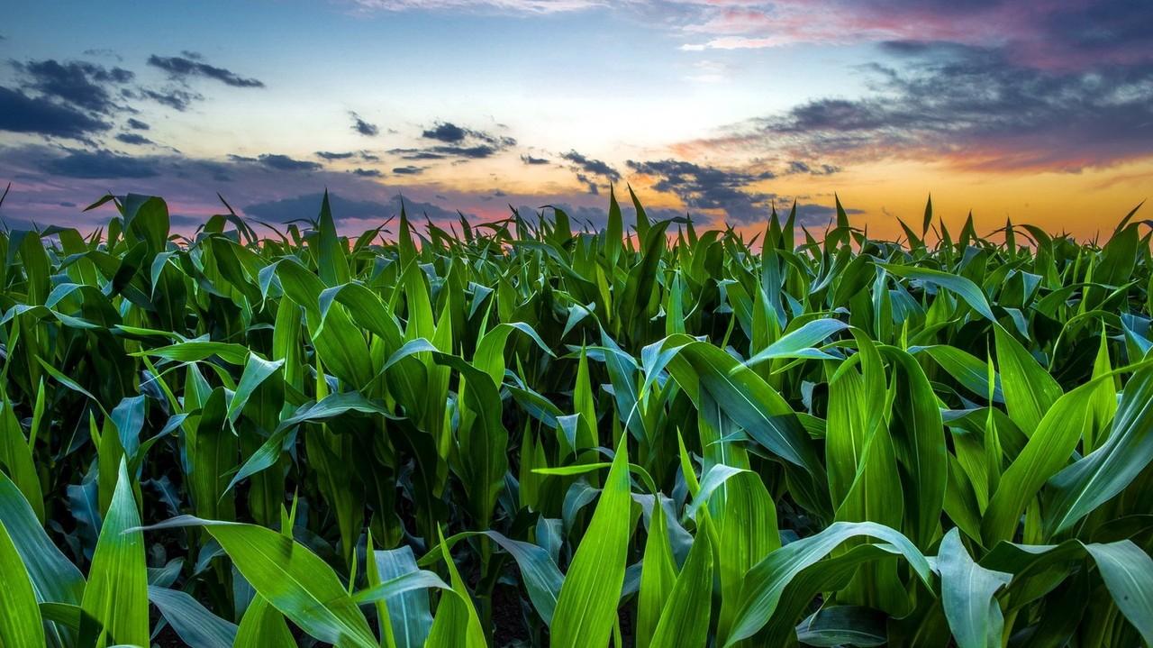 أفضل موعد لزراعة المحاصيل الشتوية المعتمدة على مياه الأمطار هو