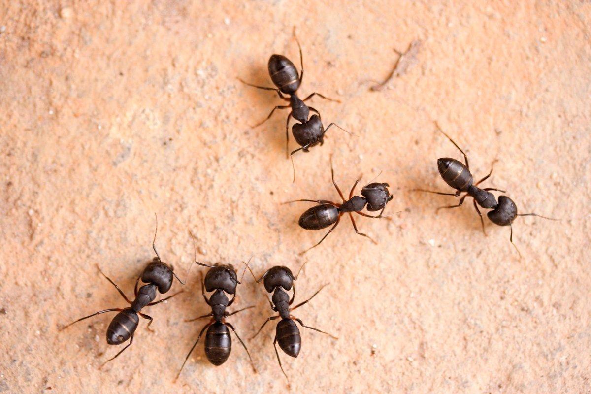 ماذا يعني وجود النمل في البيت