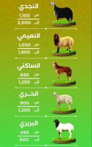 اسعار الاضاحي في الرياض