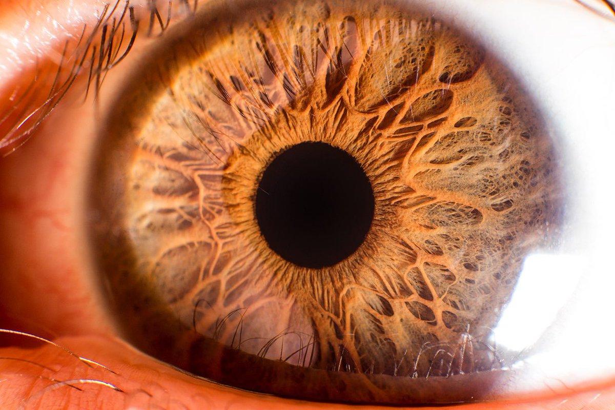 كم عدد العضلات التي تتحكم في اتزان العين
