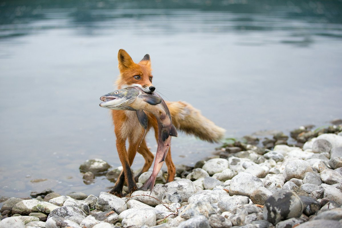 الحيوانات التي تتغذى النباتات والحيوانات
