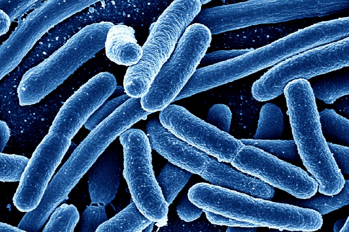 الفرق بين البدائيات والبكتيريا