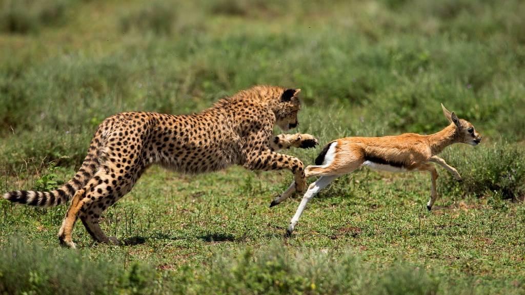 يعد هروب الحيوانات عند الخوف