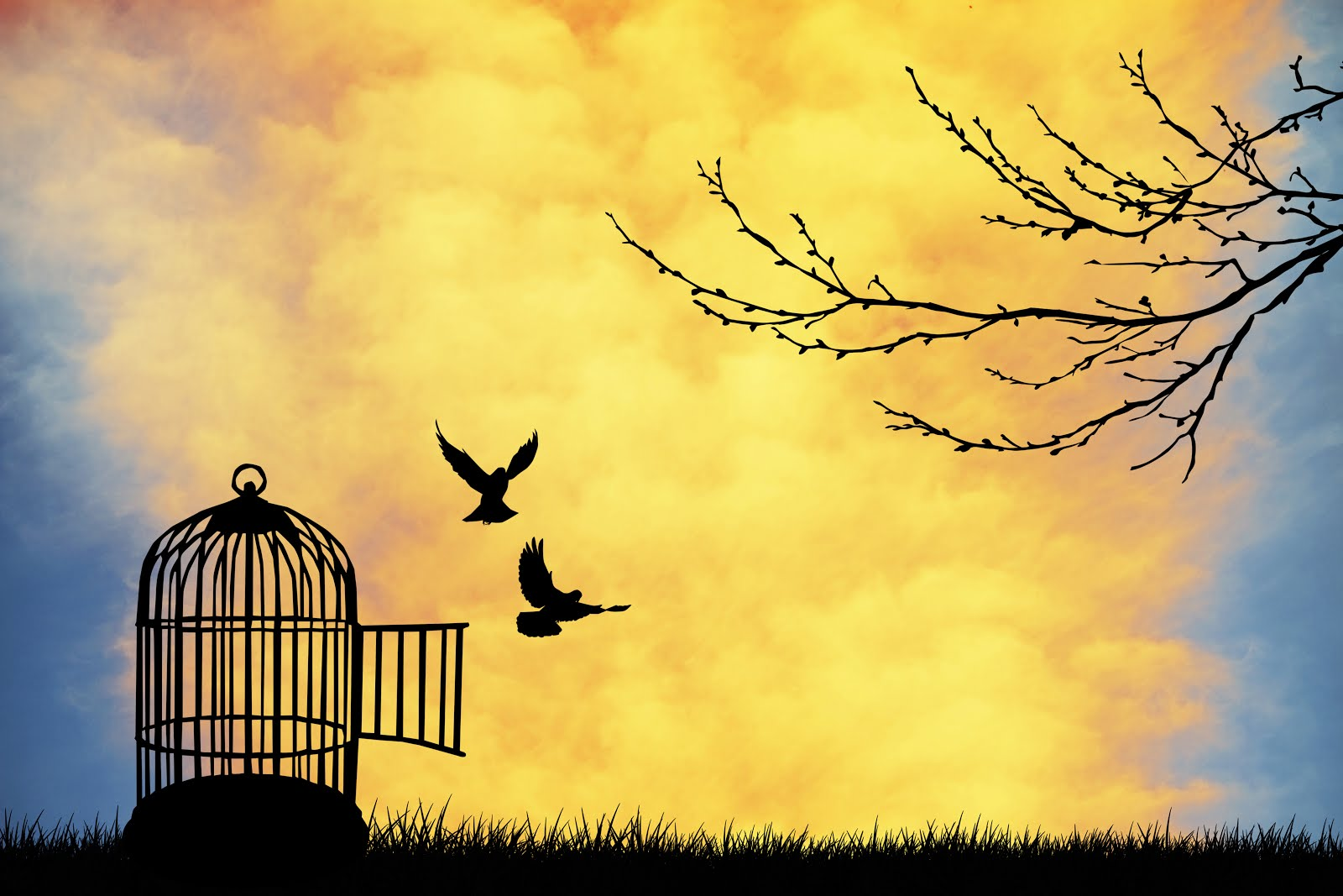 اجمل الصور المعبرة عن الحرية